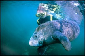 Alexandra Cousteau with manatee