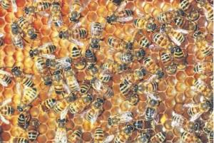 Honey or Vinegar?