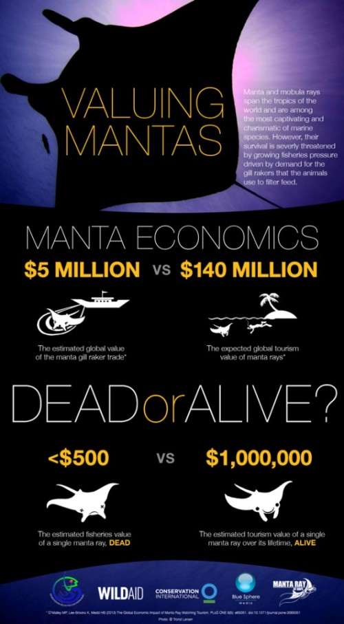 Assigning monetary units to Manta rays.